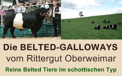 Belted Galloway Rittergut Oberweimar