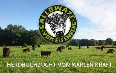 Galloway vom Eisenberg- Herdbuchzucht von Marlen Kraft