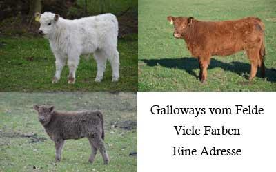 Galloway Vom Felde