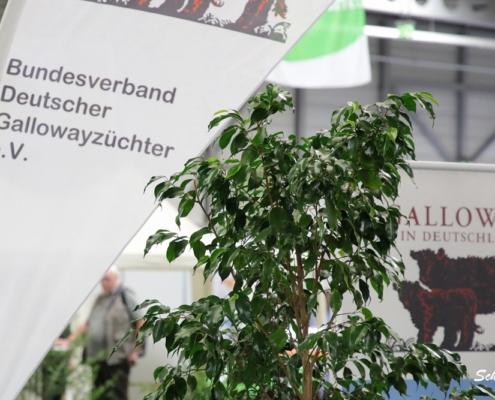 Galloway Bundesschau in Erfurt am 21.09.2018
