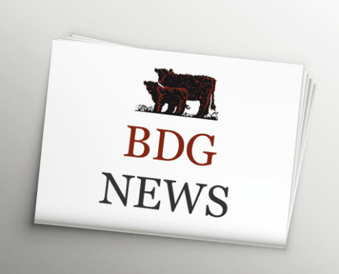 BDG NEWS
