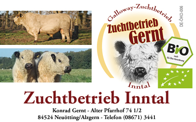Galloway Zuchtbetrieb Gernt