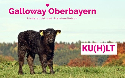 Galloway Oberbayern von Stefanie Stichlmair
